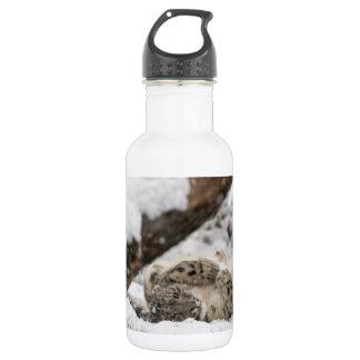 Cute Snow Leopard Plays in Snow Water Bottle