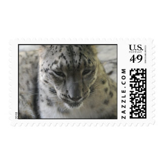 Cute Snow Leopard Postage Stamp