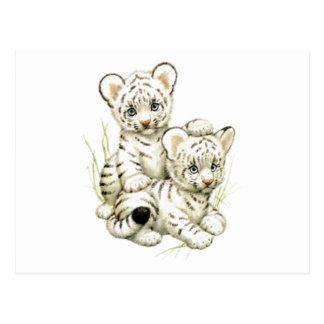 Cute Snow Tiger Cubs Postcard