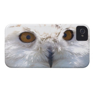 Cute Snowy Owl Eyes Wildlife Photo iPhone 4 Cover