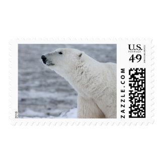Cute Snowy Polar Bear Arctic Animal Stamp
