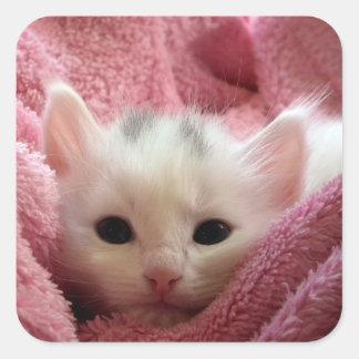 Cute soft kitten square sticker