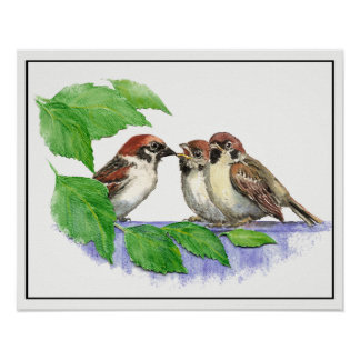 Cute Song Sparrow, Bird, Garden, Animal Nature Poster