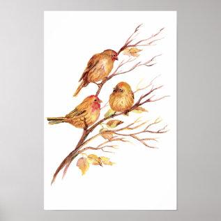 Cute Song Sparrow, Bird, Garden, Animal Nature Poster at Zazzle