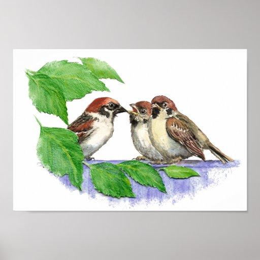 Cute Song Sparrow, Bird, Garden, Animal Nature Print