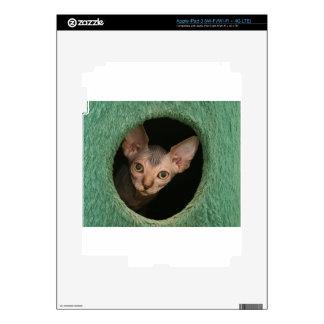 Cute sphynx kitten decals for iPad 3