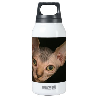 Cute sphynx kitten insulated water bottle