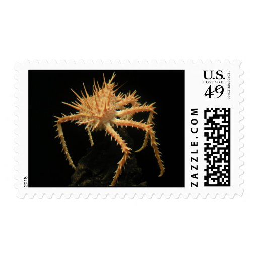 Cute Spiny Crab In The Aquarium At California Stamps