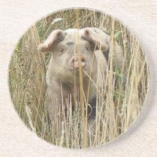 Cute Spotty Pig Coasters