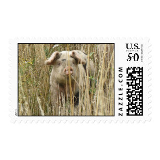 Cute Spotty Pig Postage Stamp