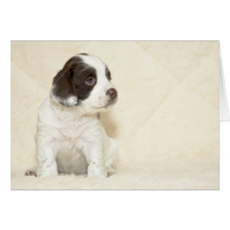 Cute Springer Spaniel Puppy with room for caption Card