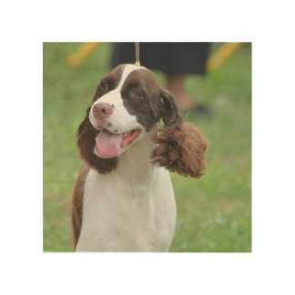 Cute Springer Spaniel Wood Canvases