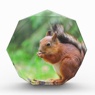 Cute squirrel acrylic award
