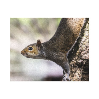 Cute Squirrel Stretched Canvas Print