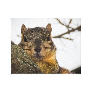 Cute Squirrel Canvas Print