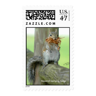 Cute Squirrel carrying twigs Postage