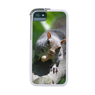 Cute Squirrel iPhone 5/5S Cases