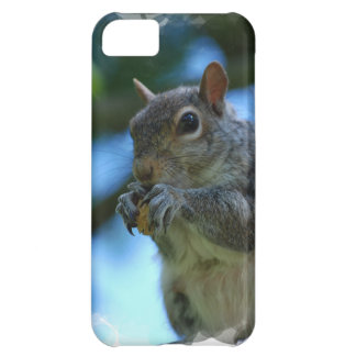 Cute Squirrel Cover For iPhone 5C