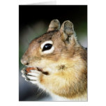 Cute Squirrel Close-Up Greeting Cards
