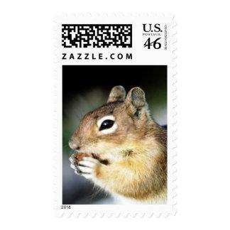 Cute Squirrel Close-Up Postage