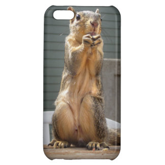 Cute Squirrel Closeup with Nut 3 iPhone 5C Covers
