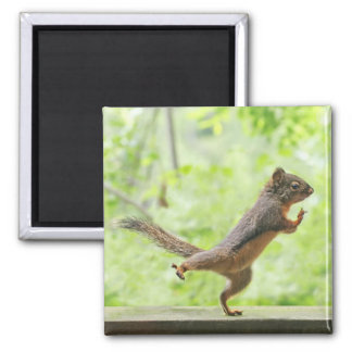 Cute Squirrel Doing Tai Chi 2 Inch Square Magnet