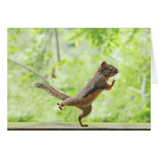 Cute Squirrel Doing Tai Chi Cards