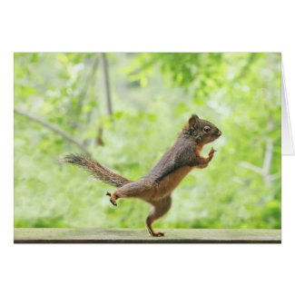 Cute Squirrel Doing Tai Chi Card
