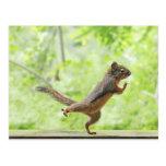 Cute Squirrel Doing Tai Chi Postcard