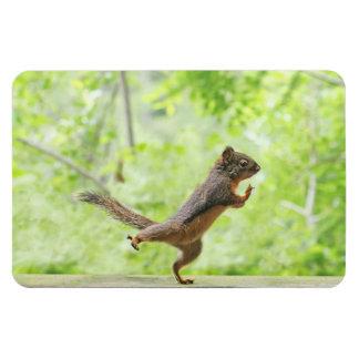 Cute Squirrel Doing Tai Chi Rectangular Magnet