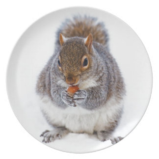 Cute squirrel eating a nut in snow plate