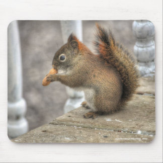 Cute Squirrel Eating a Peanut Wildlife Photo Mouse Pad