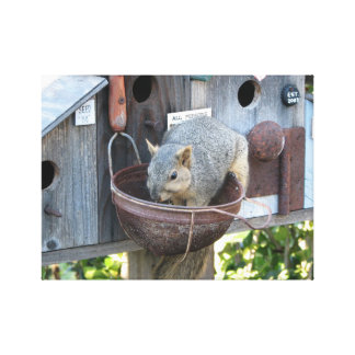 Cute Squirrel Eating From Birdhouse Canvas Art Canvas Print