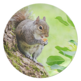 Cute Squirrel Eating in The Park Plate Plate