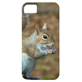 Cute Squirrel Eating Nut Photo iPhone 5 Cover