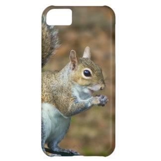 Cute Squirrel Eating Nut Photo iPhone 5C Cases