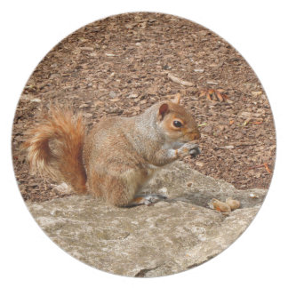 Cute Squirrel eating nuts Dinner Plate