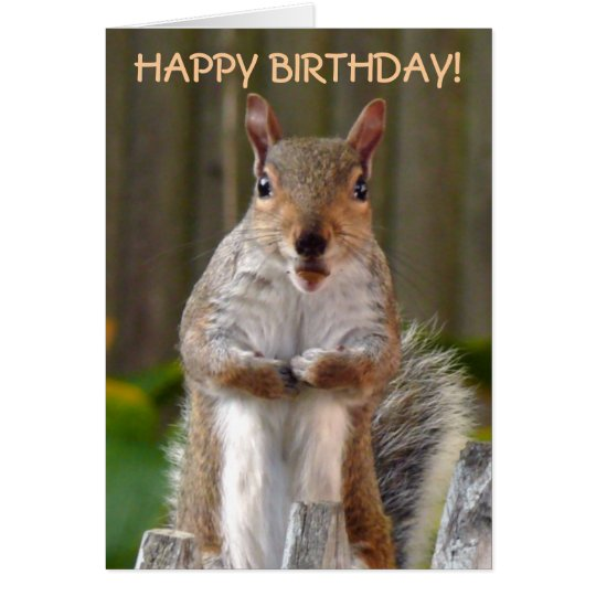 Image result for happy birthday squirrels pic