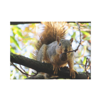 Cute Squirrel Holding a Nut Photography Canvas Art