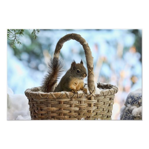 Cute Squirrel in a Basket in Winter Art Photo