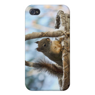 Cute Squirrel in a Basket in Winter Cases For iPhone 4
