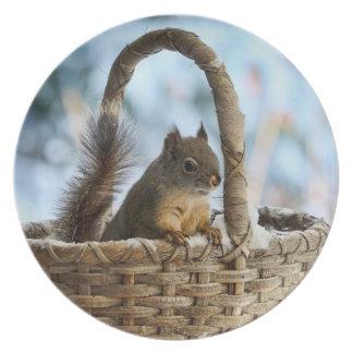 Cute Squirrel in a Basket in Winter Plate