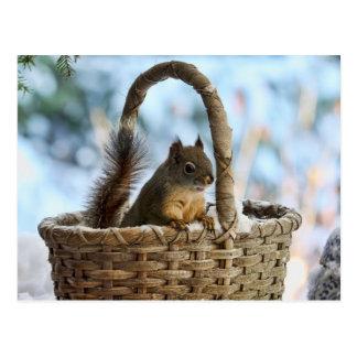 Cute Squirrel in a Basket in Winter Postcard