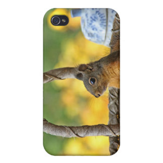 Cute Squirrel in a Basket iPhone 4 Cover
