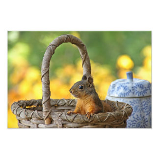 Cute Squirrel in a Basket Photo Print