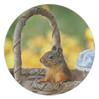 Cute Squirrel in a Basket Party Plates