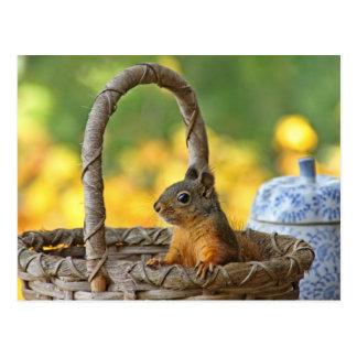 Cute Squirrel in a Basket Postcard