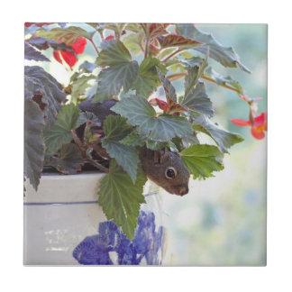 Cute Squirrel in a Flower Pot Ceramic Tiles