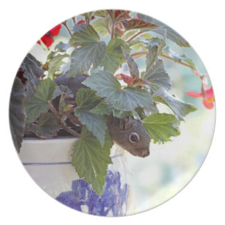 Cute Squirrel in a Flower Pot Dinner Plate