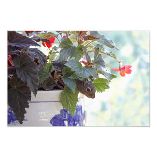 Cute Squirrel in a Flower Pot Photo Print